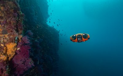 Notilo Plus, l'aventure entrepreneuriale sous-marine